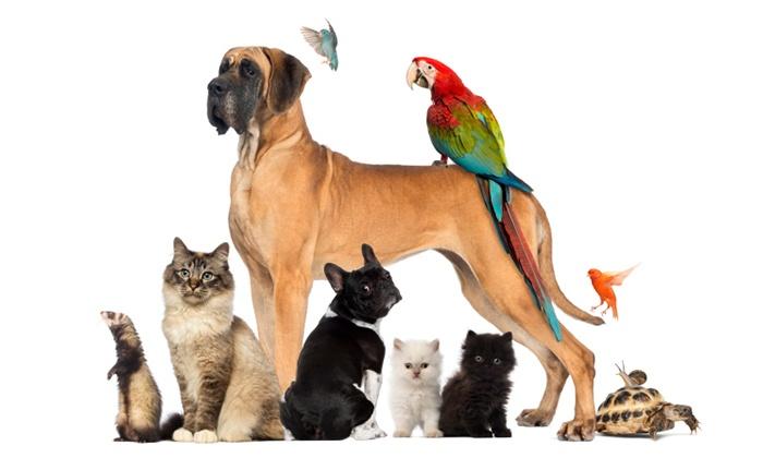購買寵物處方飼料需要確保品質