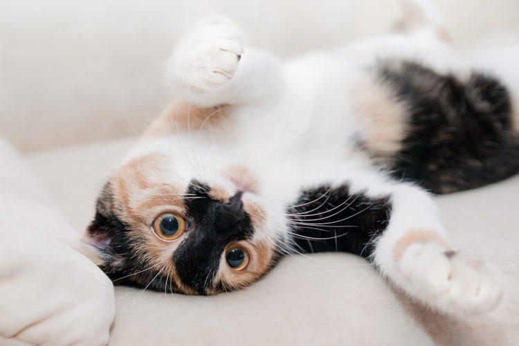 寵物美容課程和獸醫課程怎麼選