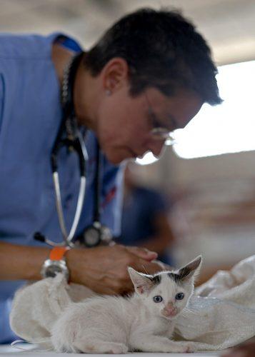 讓寵物感到很舒服的元朗獸醫服務